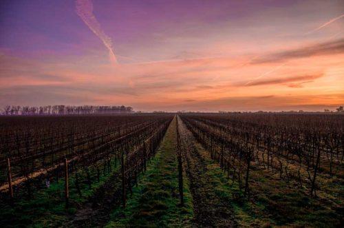 Les étudiants d'AIVA auront plusieurs fois l'occasion d'aller sur le terrain et de toucher de leurs propres main la terre, pour se familiariser avec le monde professionnel du vin.
