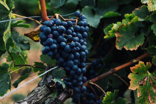 L'école du vin, reportage de France 3 Alsace.